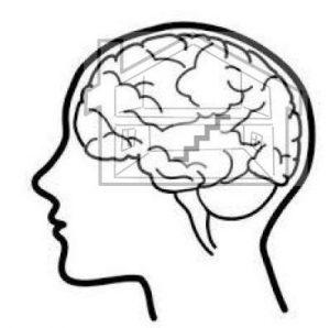 The brain, emotions and behaviours BLOG 2 - upstairs downstairs brain